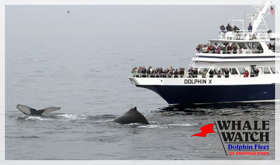 dolphin-fleet-whale-watch-provincetown-2