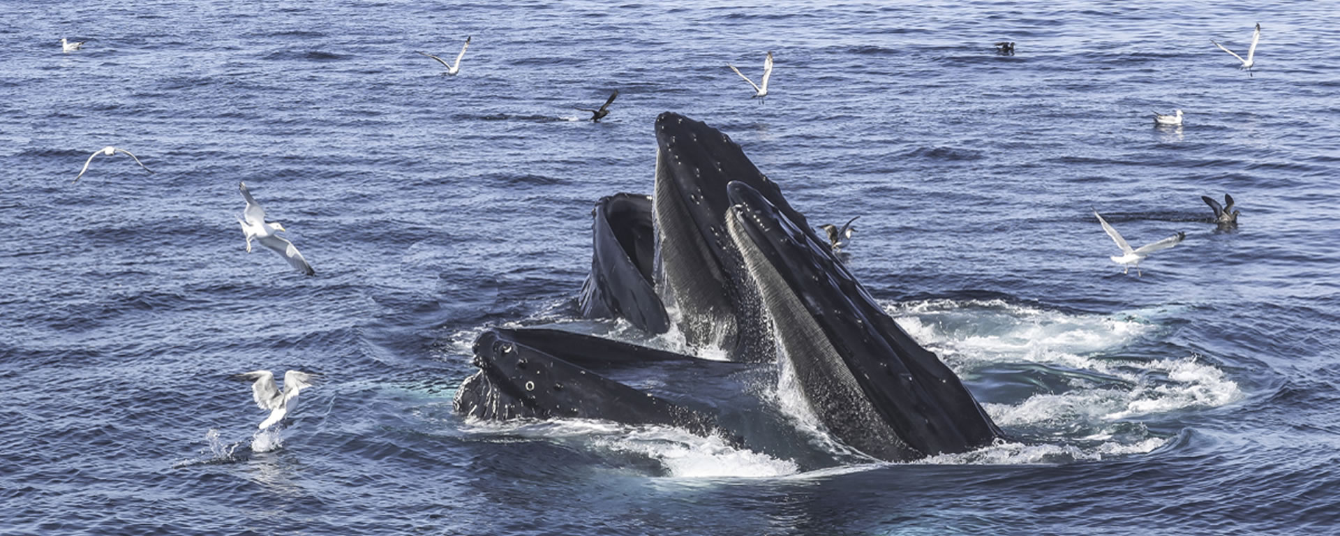 Cape Cod Whale Watch
