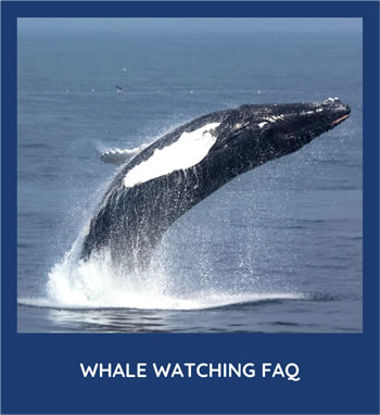 Whale Watching FAQ
