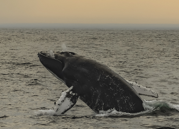 Sunset Whale Watch